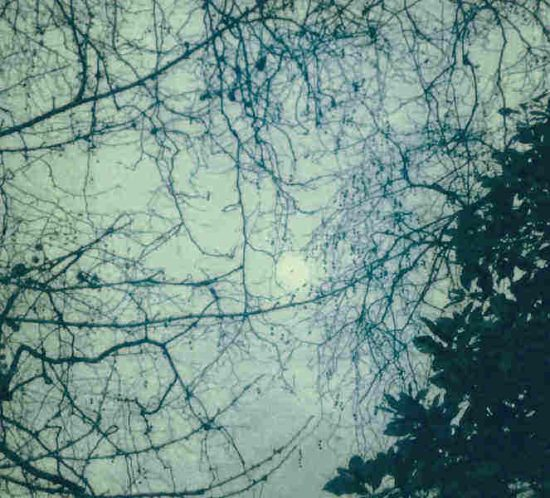 Moon seen through tree branches