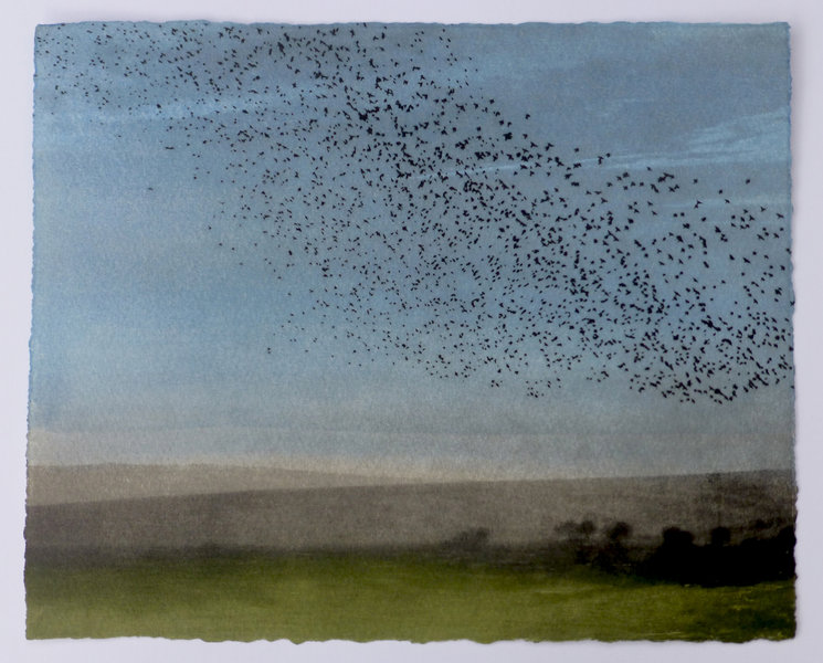 Birds flying over the South Downs