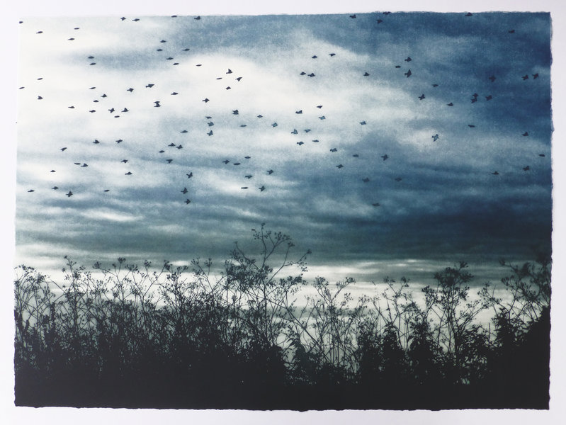 Large flock of birds flying by