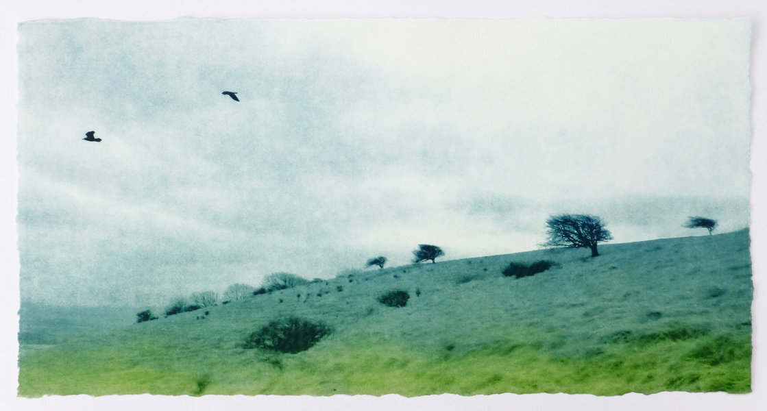 Birds flying over the South Downs way