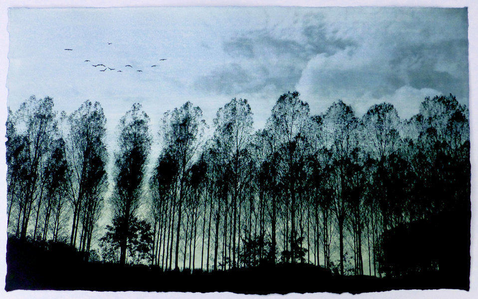 row of trees in silhouette