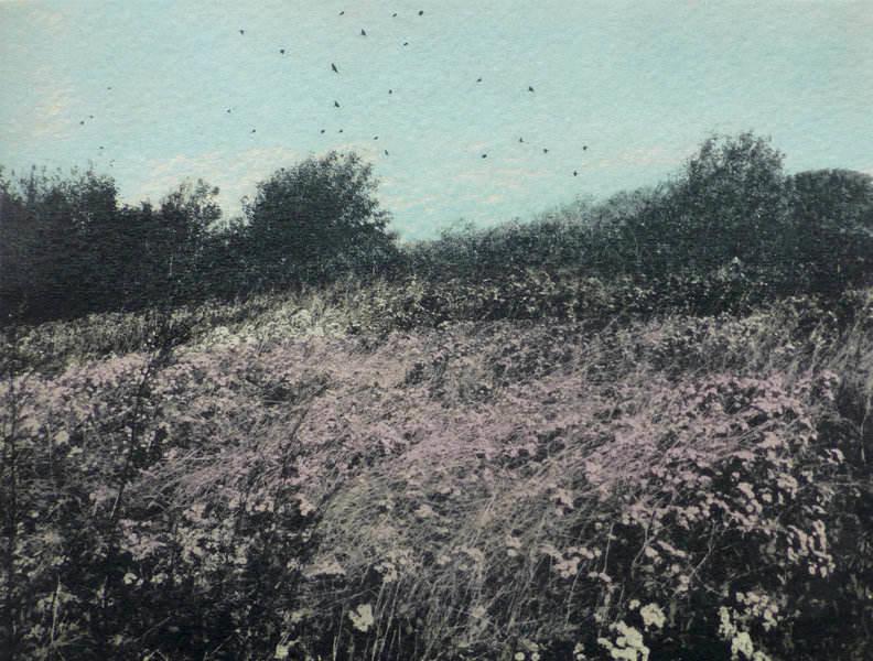 pink flowers & birds