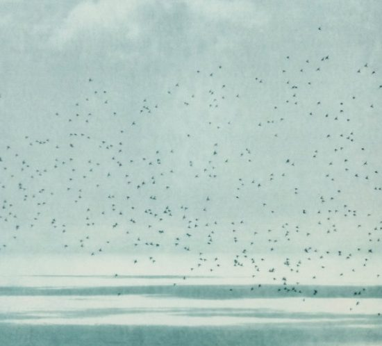 starling murmuration over the sea