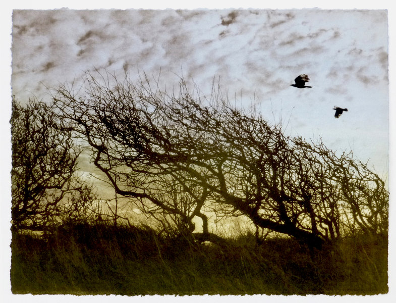 trees in sillhouette with birds
